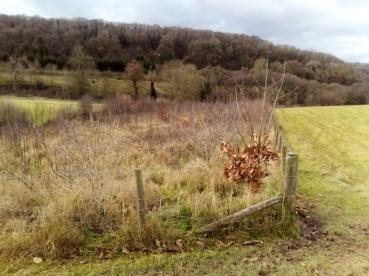 Tree Planring 2